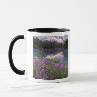 USA, Alaska, Alsek-Tatshenshini Wildnis Tasse