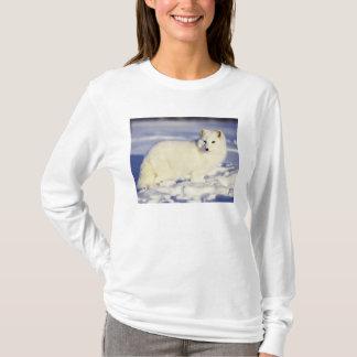USA, Alaska. Arktischer Fuchs im Wintermantel. T-Shirt