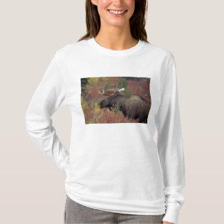 USA, Alaska, Denali Nationalpark-Stier-Elch herein T-Shirt