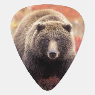 USA, Alaska, Denali NP, weiblicher Grizzlybär Plektron