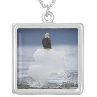 USA, Alaska, Holkham Bucht, Weißkopfseeadler Versilberte Kette