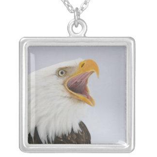 USA, Alaska, Homer. Schreiender Weißkopfseeadler. Versilberte Kette