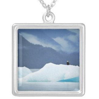 USA, Alaska, innerer Durchgang. Weißkopfseeadler Versilberte Kette