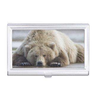 USA, Alaska, Katmai Nationalpark, Braunbär 4 Visitenkarten Etui
