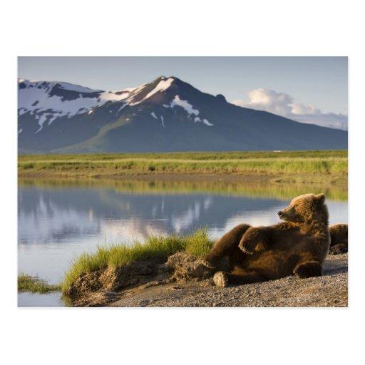 USA, Alaska, Katmai Nationalpark, Braunbären 2 Postkarten