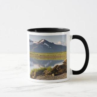 USA, Alaska, Katmai Nationalpark, Braunbären 2 Tasse
