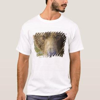 USA. Alaska. Konzentration-EIn KüstenBraunbär T-Shirt