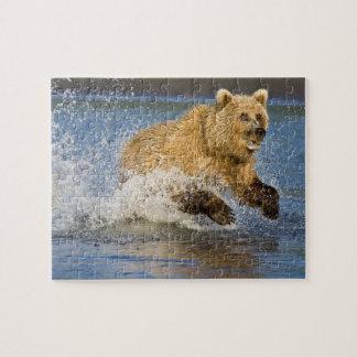USA. Alaska. KüstenBraunbär, der für 2 fischt Foto Puzzle