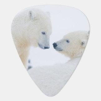 USA, Alaska, Küstenebene 1002 von der Arktis Plektrum