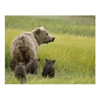 USA, Alaska, See Nationalpark Clarks. Graubär Postkarte