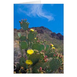 USA, Arizona. Kaktus in den Hügeln Karte