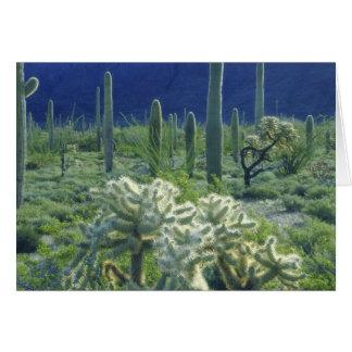 USA, Arizona, Orgelpfeife-Kaktus-Staatsangehöriger Karte