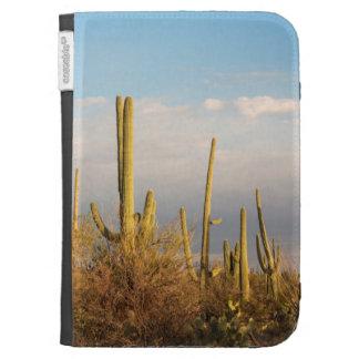 USA, Arizona, Saguaro-Nationalpark, Saguaro