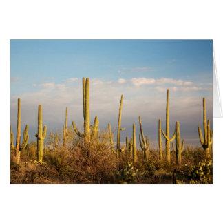 USA, Arizona, Saguaro-Nationalpark, Saguaro Karte