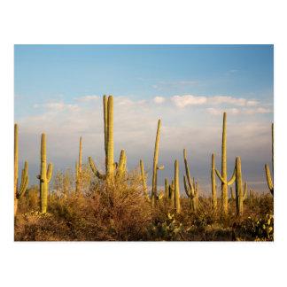 USA, Arizona, Saguaro-Nationalpark, Saguaro Postkarte
