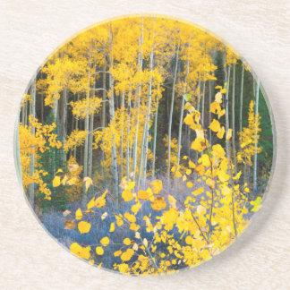 USA, Colorado. Helle gelbe Espen in Rockies 2 Sandstein Untersetzer