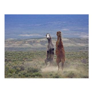 USA, Colorado, Moffat County. Zwei wilde Pferde Postkarte