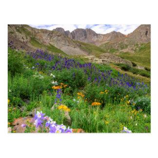 USA, Colorado. Wildblumen im amerikanischen Becken Postkarte