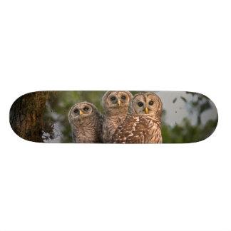 USA, Florida, Viera Sumpfgebiete. Drei abgehalten 19,7 Cm Skateboard Deck
