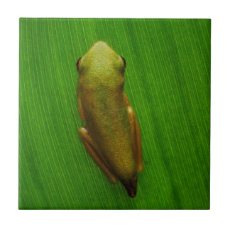 USA, Georgia, Savanne, kleiner Frosch auf Blatt Keramikfliese