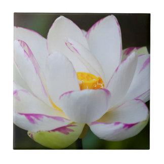 USA, Georgia, Savanne, Lootus Blumen-Blühen Keramikfliese