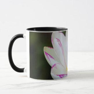 USA, Georgia, Savanne, Lootus Blumen-Blühen Tasse
