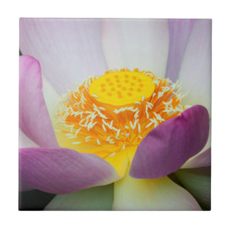 USA, Georgia, Savanne, Nahaufnahme von Lotus 2 Keramikfliese