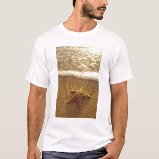 USA, Hawaii, Maui, Maui, Kihei, Starfish und T-Shirt