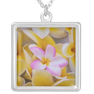 USA, Hawaii, Oahu, Plumeria-Blumen in Blüte 1 Versilberte Kette