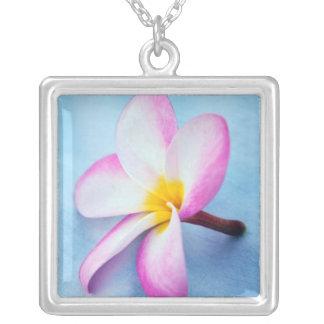 USA, Hawaii, Oahu, Plumeria-Blumen in Blüte 2 Versilberte Kette