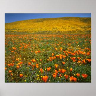 USA, Kalifornien, Antilopen-Tal Kalifornien Poster