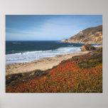 USA, Kalifornien, großes Sur, rote Pflanzen durch  Poster