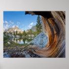 USA, Kalifornien, Inyo staatlicher Wald. Alte Poster