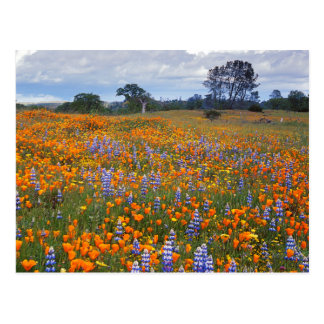 USA, Kalifornien, Santa Margarita, Avenales Postkarte