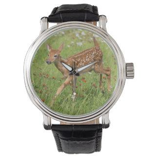 USA, Minnesota, Sandstein, Minnesota-wild lebende Uhr