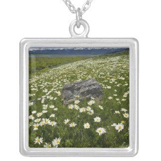 USA, Montana, wildes Gänseblümchen, das vorbei in Versilberte Kette