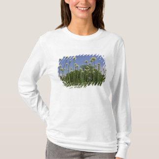 USA, Neu-England, Massachusetts, Boston, 3 T-Shirt