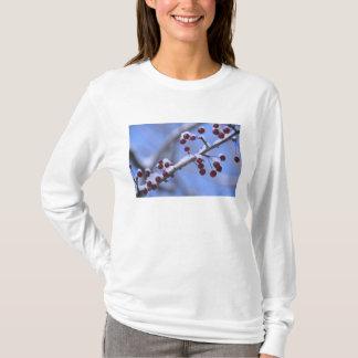 USA, Neu-England, Massachusetts, Lesung, 3 T-Shirt