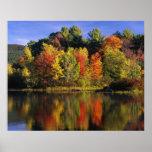 USA, New Hampshire, Moultonborough. Bäume herein Posterdrucke