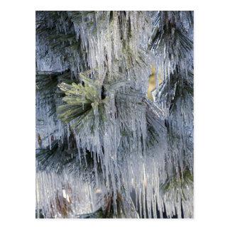 USA, Oregon, Biegung. Das Eis auf Ponderosa Kiefer Postkarte