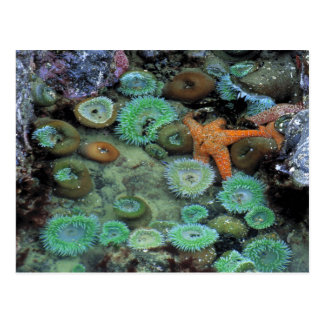 USA, Oregon, Nepture SP. Ein orange Starfish ist Postkarte