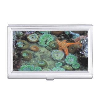 USA, Oregon, Nepture SP. Ein orange Starfish ist Visitenkarten Etui