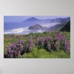 USA, Oregon, Nesika Strand. Lupine und Oregon Plakatdruck