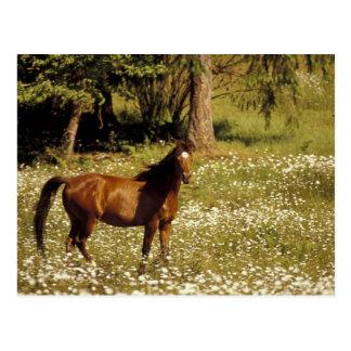 USA, Oregon. Pferd auf dem Gebiet der Postkarte