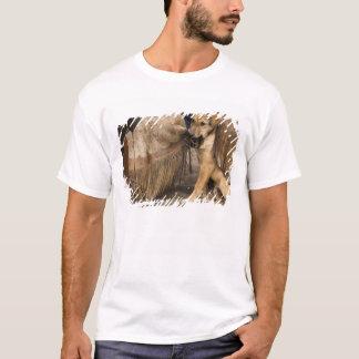 USA, Oregon, Seneca, Ponderosa Ranch. Ein Welpe T-Shirt