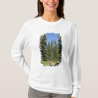 USA, Oregon, Willamette staatlicher Wald, Fall T-Shirt