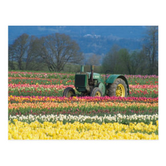USA, Oregon, Woodburn, hölzerne Schuh-Tulpe 2 Postkarte