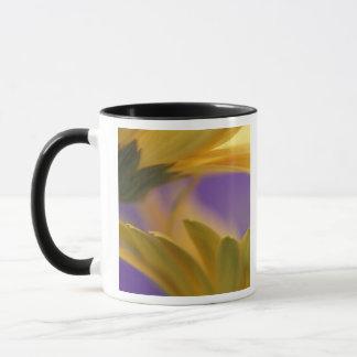 USA, Pennsylvania. Gelbe Gerbera-Gänseblümchen, Tasse