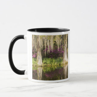 USA, South Carolina, Charleston. Zypresse-Bäume Tasse