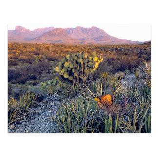 USA, Texas, große Biegung NP. Eine sandige rosa Postkarte